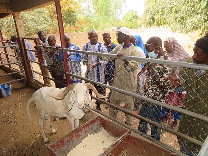 Au Burkina, on se forme pour garantir le bien-être des animaux