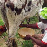 Manifeste en faveur des producteurs laitiers