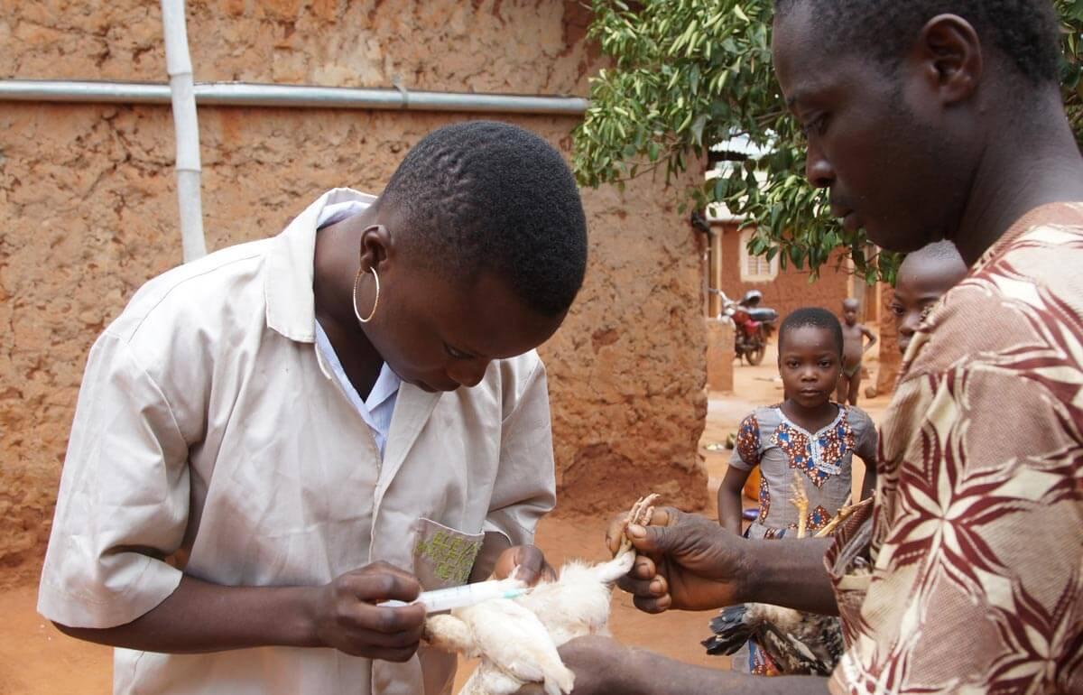 Lancement du projet « Professionnalisation des ParaProfessionnels Vétérinaires (P3V) »